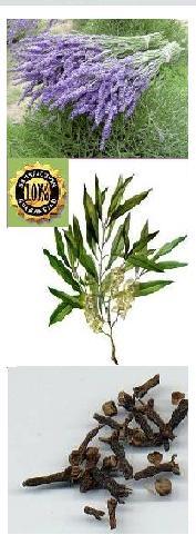 tlc Respiratory Essential Oil Wellness Support Blend