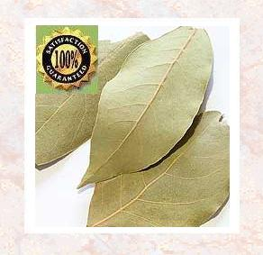 Laurus Nobilis - Bay Leaf<br /><br /> Pure Natural Therapeutic Essential Oil