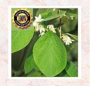 Benzoin (Styrax Benzoin)<br /> Pure Natural Therapeutic Essential Oil