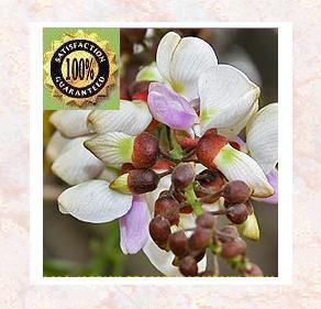 Davana Pure & Natural Therapeutic Essential Oil