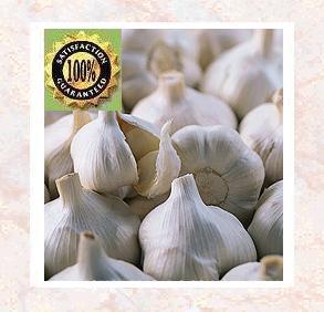 Garlic Pure Natural Essential Oil