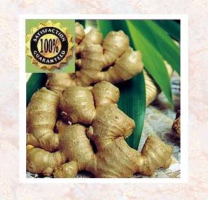 Ginger co2 Pure & Natural Essential Oil