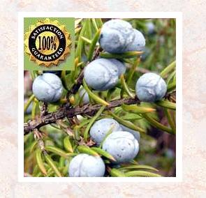 Juniper Berry (Juniperus Communis) Therapeutic Essential Oil