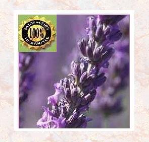 Lavendin Alititude Essential Oil (Lavendula hybredia) Pure Natural Therapeutic Essential Oil