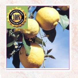 Lemon (Citrus Limonum) Pure Natural Essential Oil