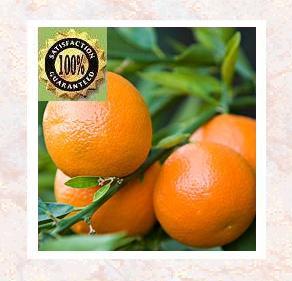 Mandarin (Citrus reticulata) Pure Natural Essential Oil