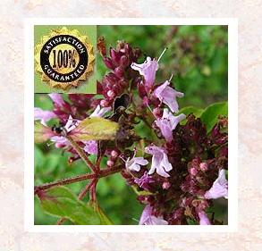 Marjoram (Orinanum Majorana) Pure Natural Essential Oil