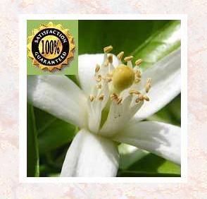 Neroli (Citrus Aurantium) Therapeutic Essential Oil