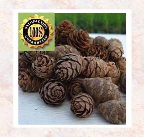 Peru Balsam Pure Natural Essential Oil