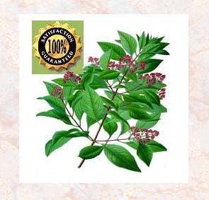 Sandalwood (Santalum Album) Natural Essential Oil Essential Oil