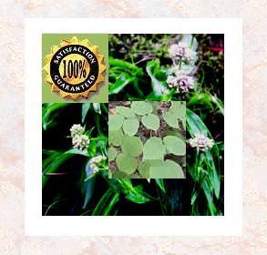 Spikenard (Nardostachys jatamansi) Pure Natural Organic Essential Oil