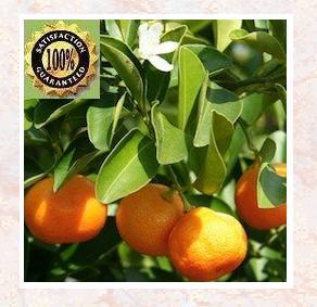 Orange Sweet (Citrus Sinensis) Pure Natural Essential Oil