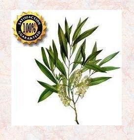 Tea Tree (Melaleuca Alternifolia) Pure Natural Essential Oil