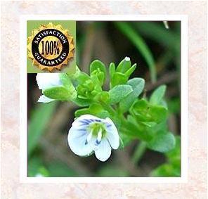 Thyme (Thymus Vulgaris) Pure Natural Essential Oil